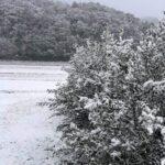 オリーブの樹寒さは耐えられる?