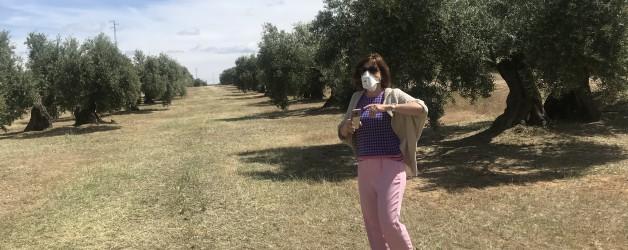 オリーブの花の花粉症