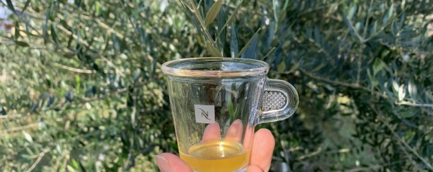 オリーブオイル新油の季節