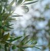 オリーブオイル生産の地『マルタ島』の魅力に迫ります!